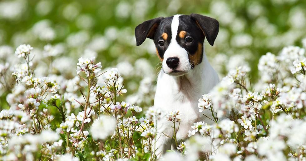 Cachorros WEB Agrigan 5