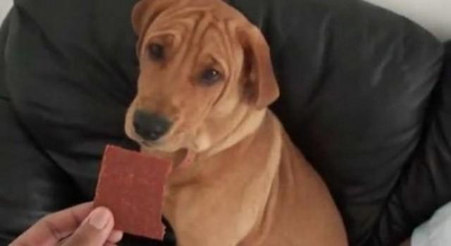 Perro Chocolate